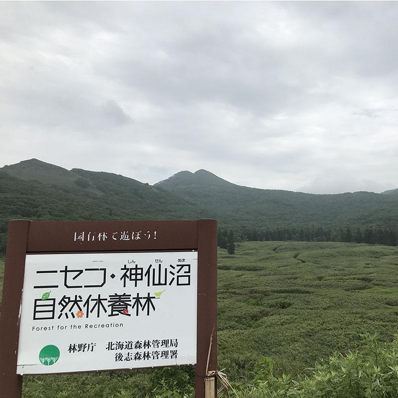 ニセコ・神仙沼自然休養林